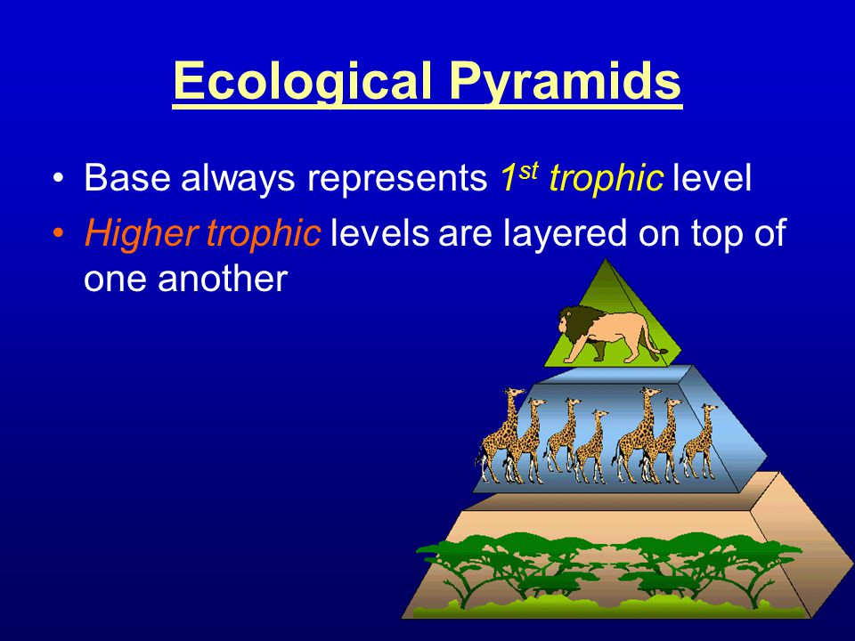 Ecological Pyramids Base always represents 1st trophic level