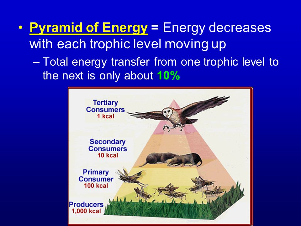 Pyramid of Energy = Energy decreases with each trophic level moving up