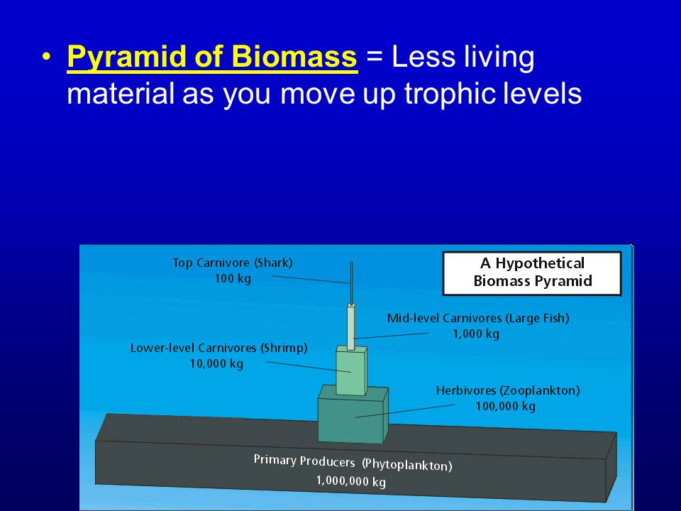 Pyramid of Biomass = Less living material as you move up trophic levels