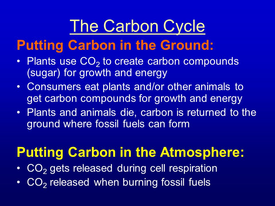 The Carbon Cycle Putting Carbon in the Ground: