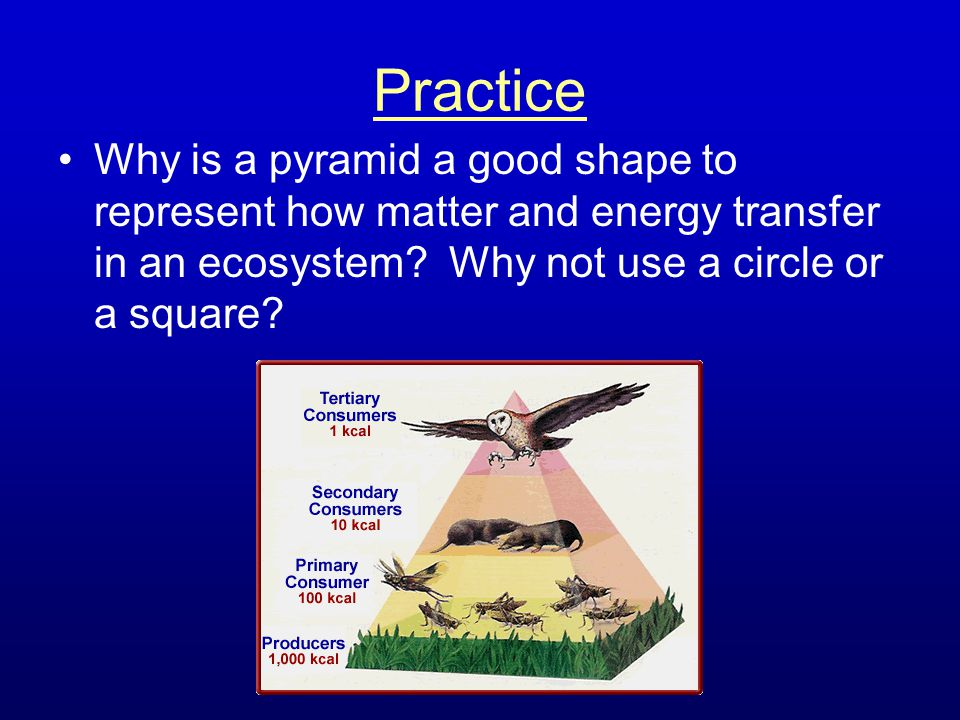 Practice Why is a pyramid a good shape to represent how matter and energy transfer in an ecosystem.