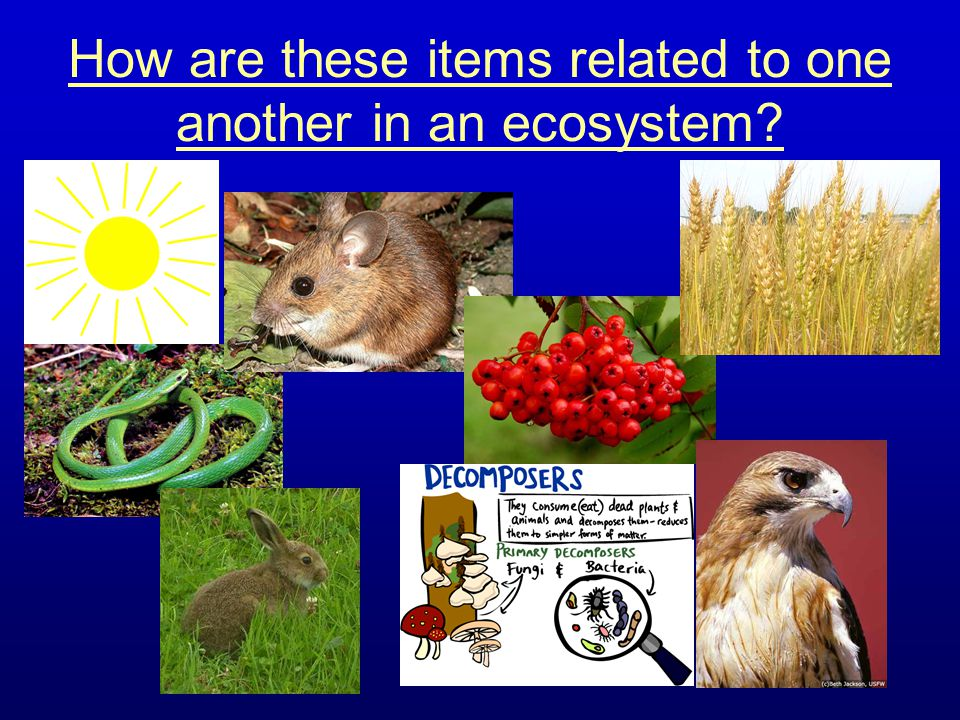 How are these items related to one another in an ecosystem