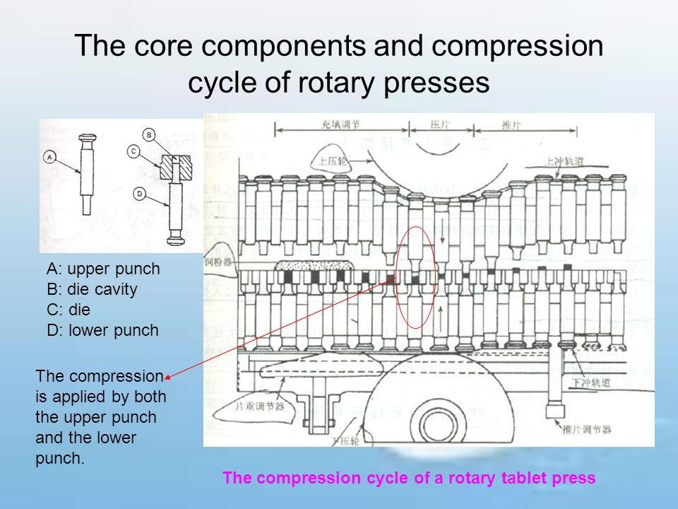 The core components and compression cycle of rotary presses