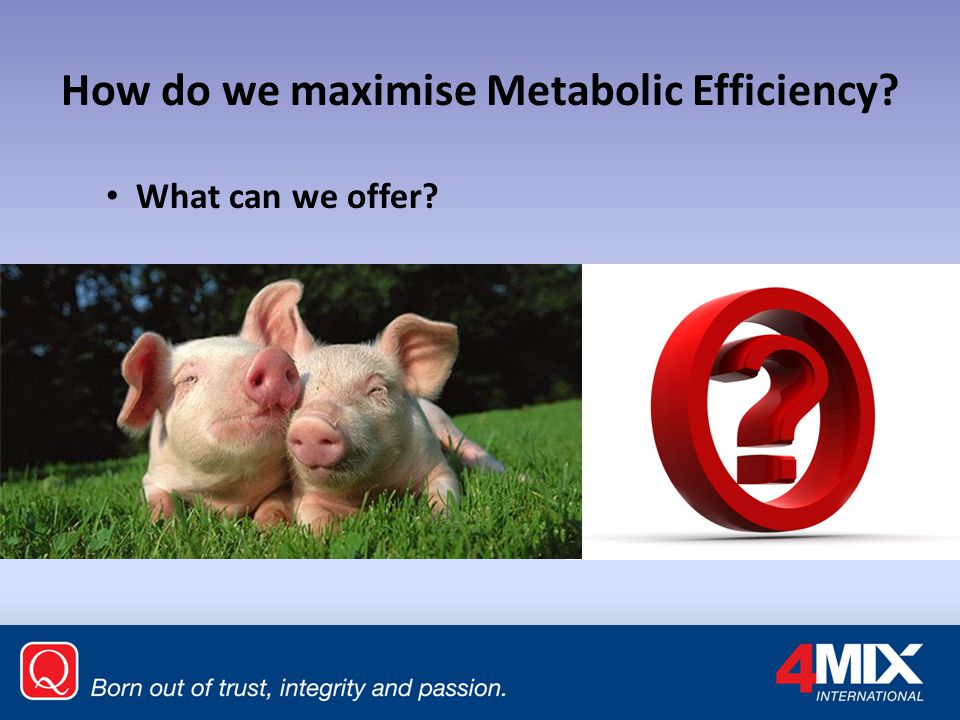 How do we maximise Metabolic Efficiency