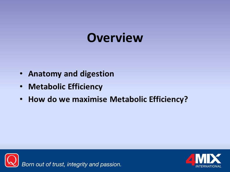 Overview Anatomy and digestion Metabolic Efficiency