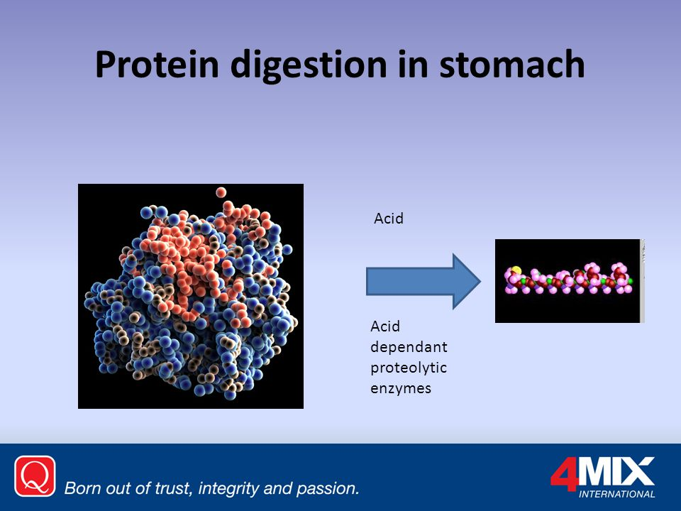 Protein digestion in stomach
