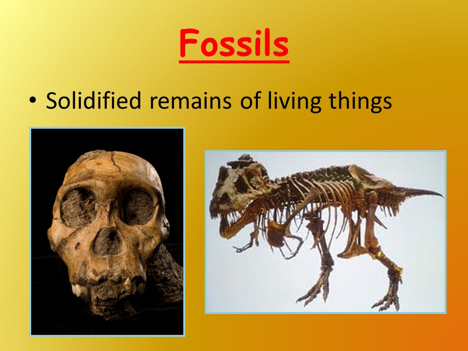 Fossils Solidified remains of living things