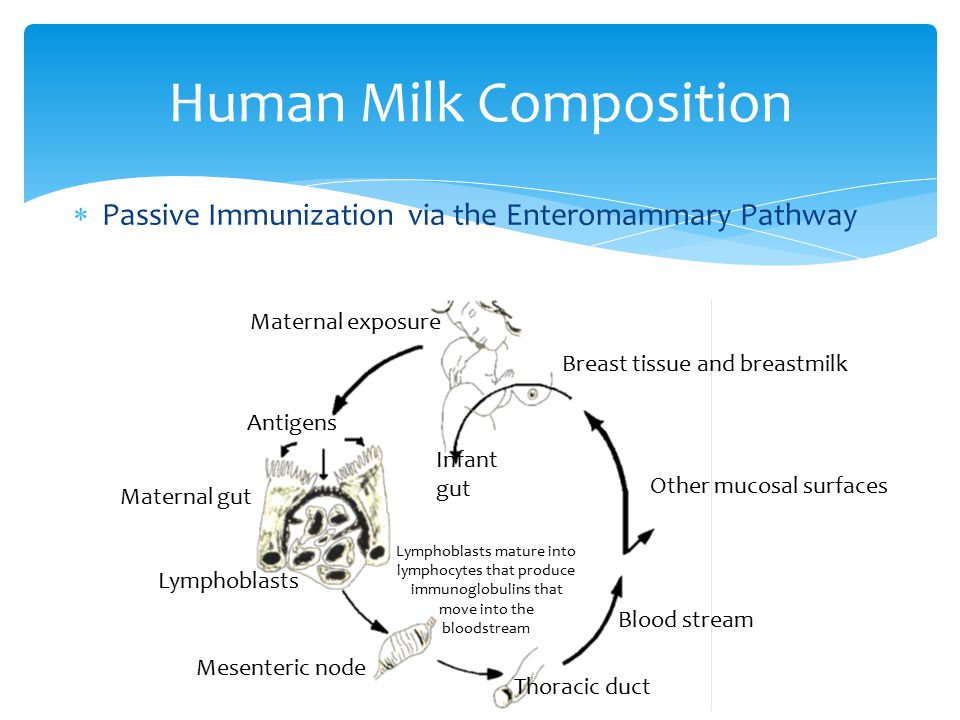 Human Milk Composition