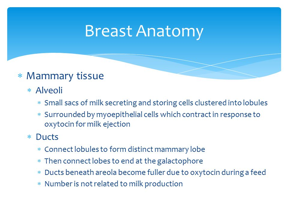 Breast Anatomy Mammary tissue Alveoli Ducts
