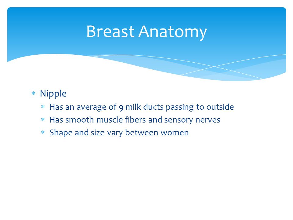 Breast Anatomy Nipple. Has an average of 9 milk ducts passing to outside. Has smooth muscle fibers and sensory nerves.