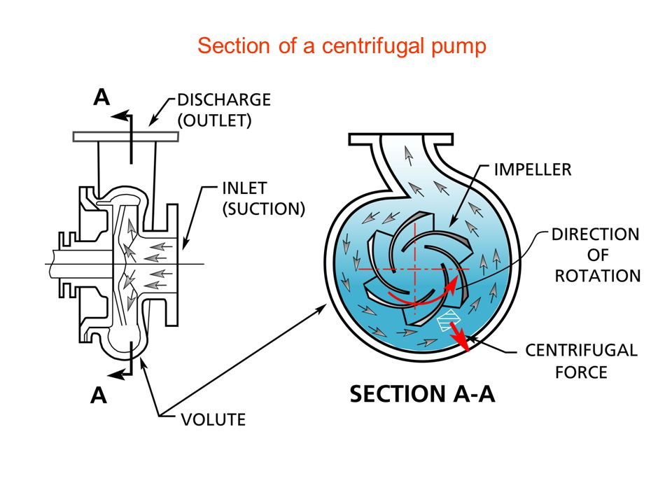 Section of a centrifugal pump