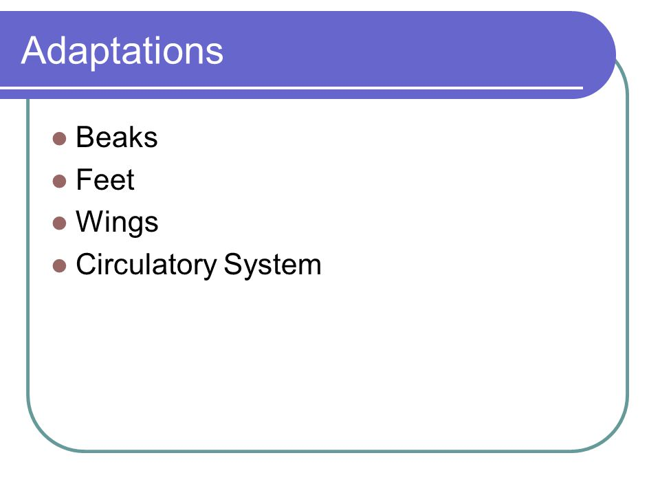 Adaptations Beaks Feet Wings Circulatory System