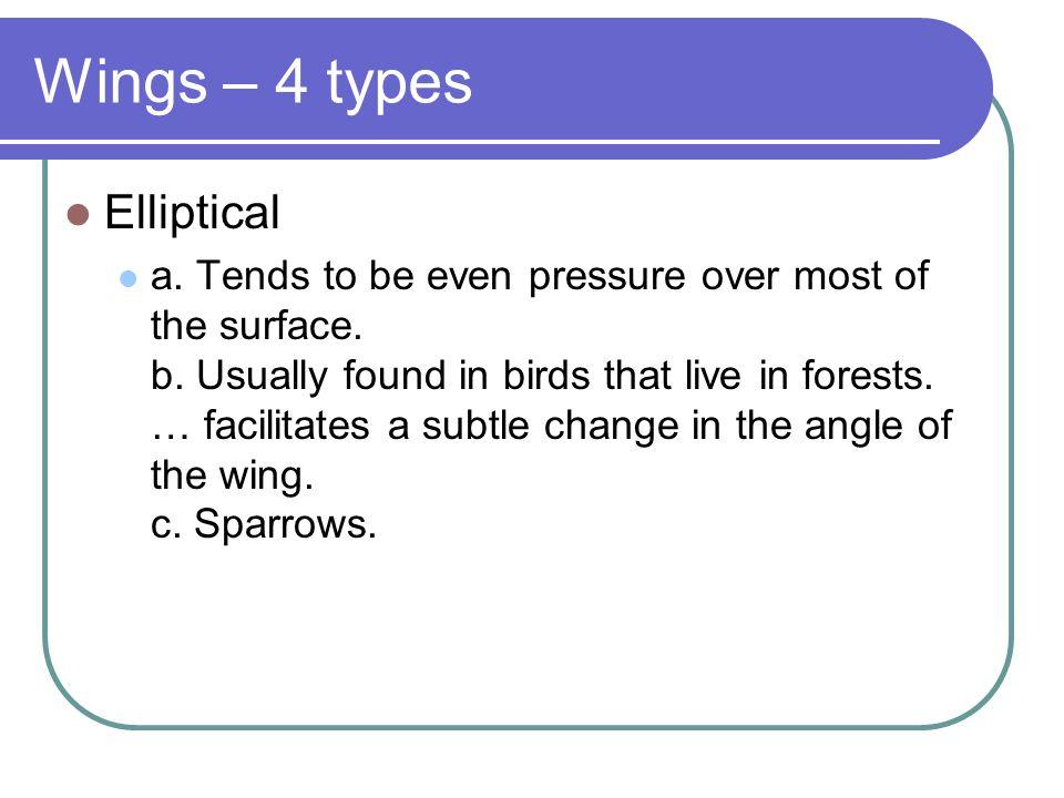 Wings – 4 types Elliptical