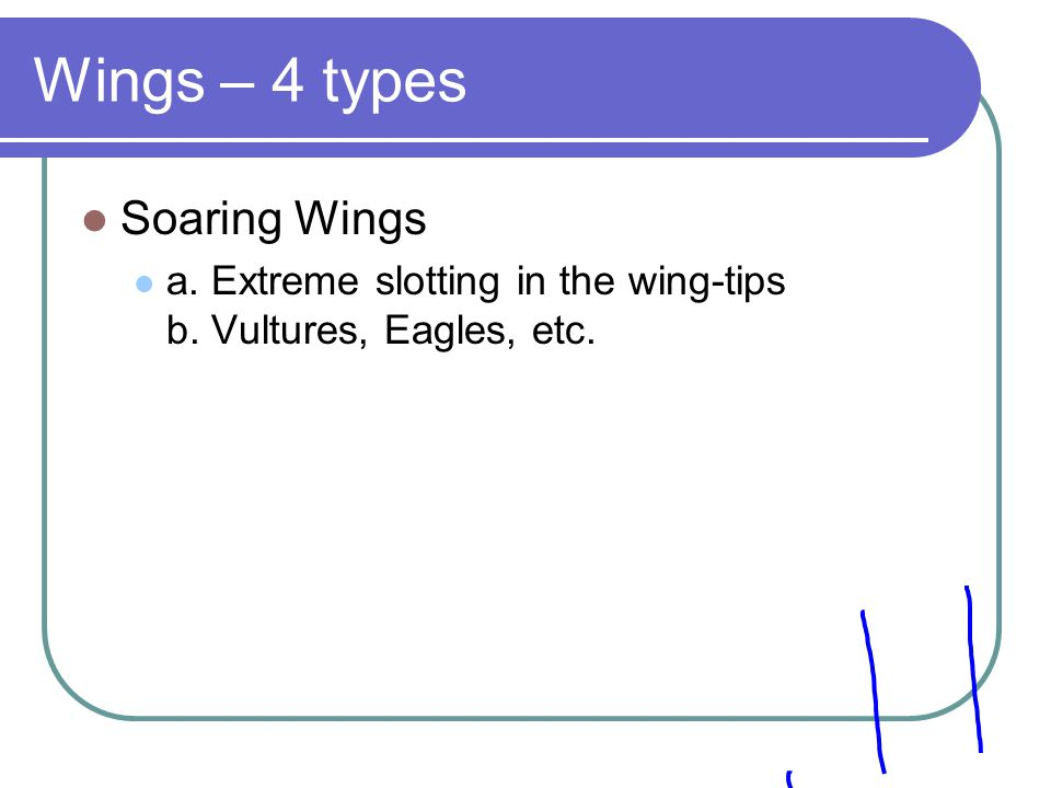 Wings – 4 types Soaring Wings