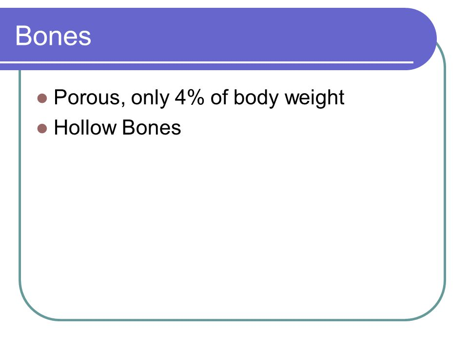 Bones Porous, only 4% of body weight Hollow Bones