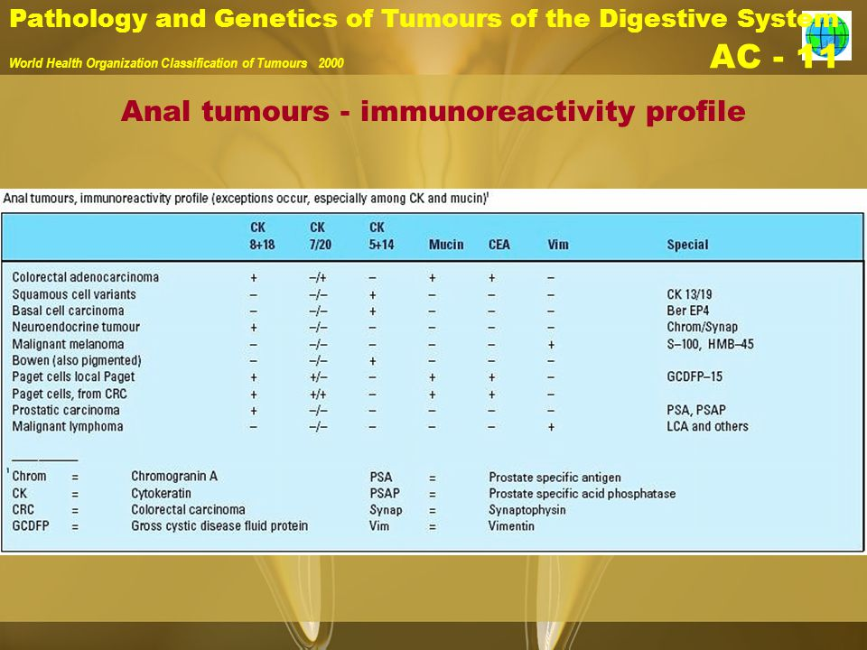 Anal tumours - immunoreactivity profile