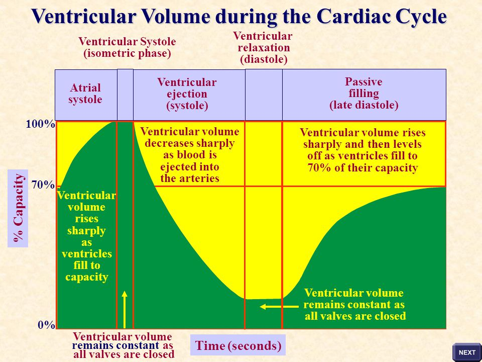 Ventricular Volume during the Cardiac Cycle