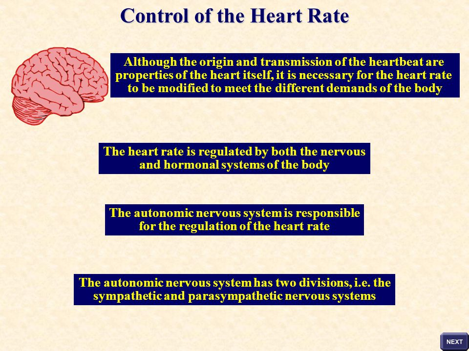 Control of the Heart Rate
