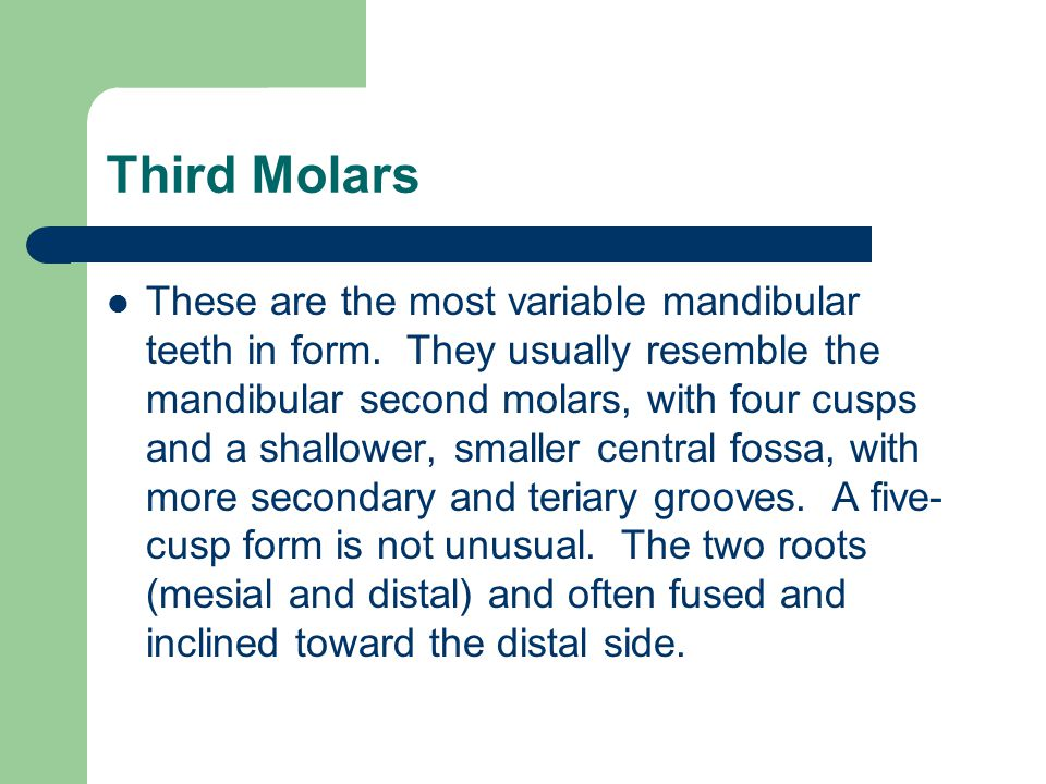 Third Molars