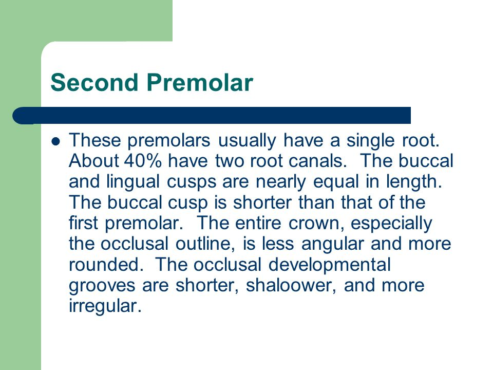 Second Premolar