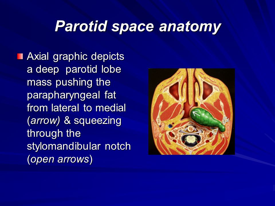 Parotid space anatomy