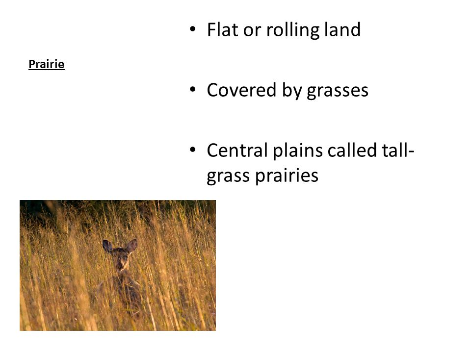 Central plains called tall-grass prairies