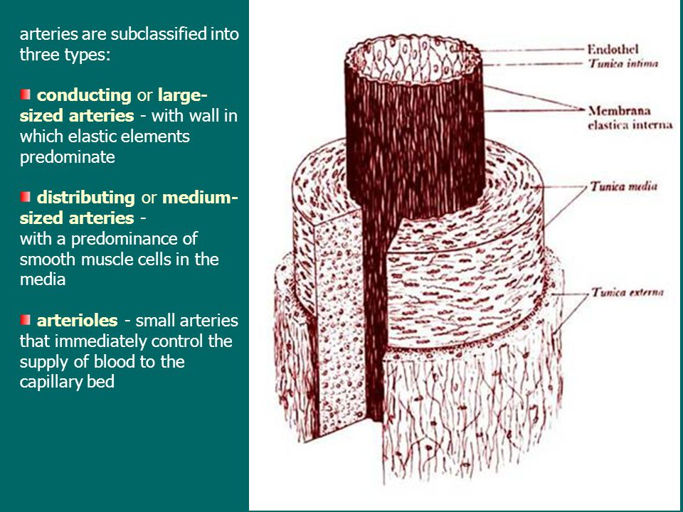 arteries are subclassified into three types: