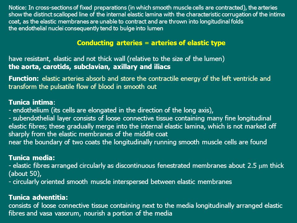 Conducting arteries = arteries of elastic type