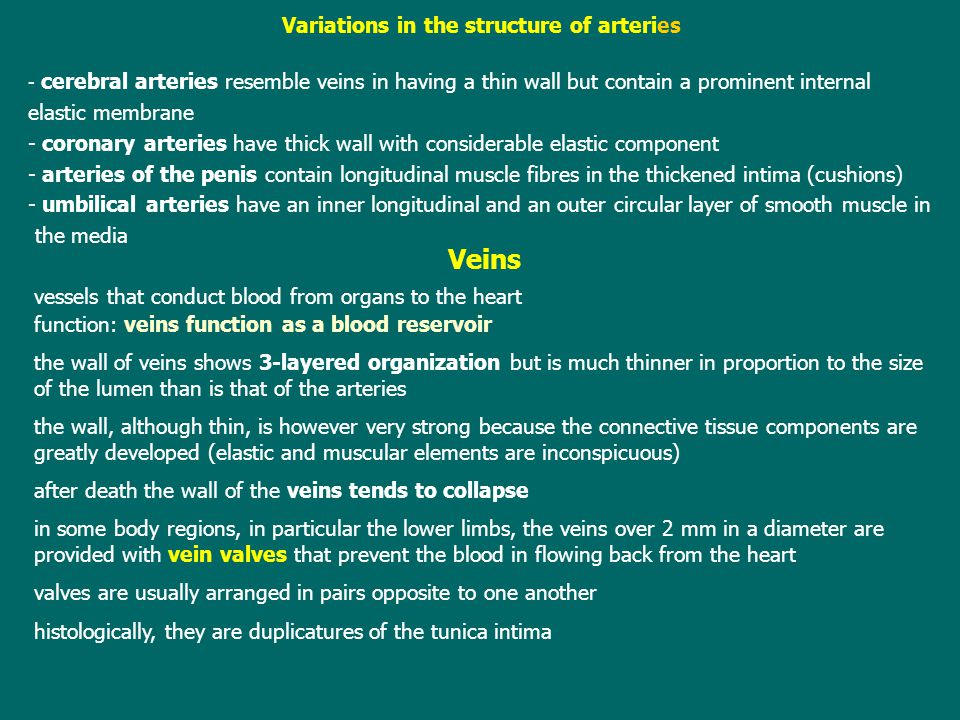 Variations in the structure of arteries
