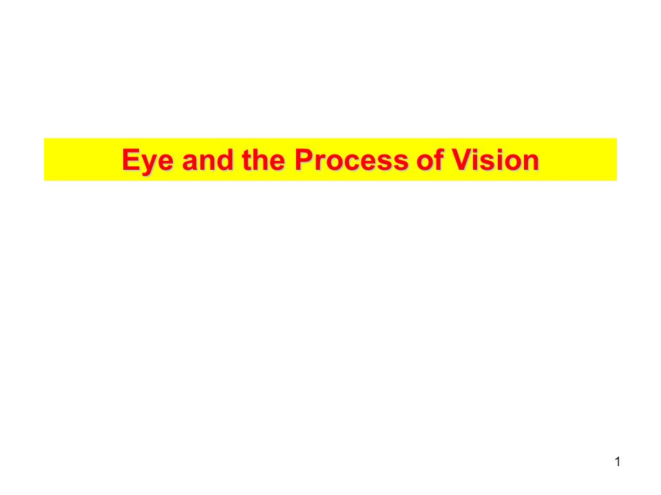 Eye and the Process of Vision