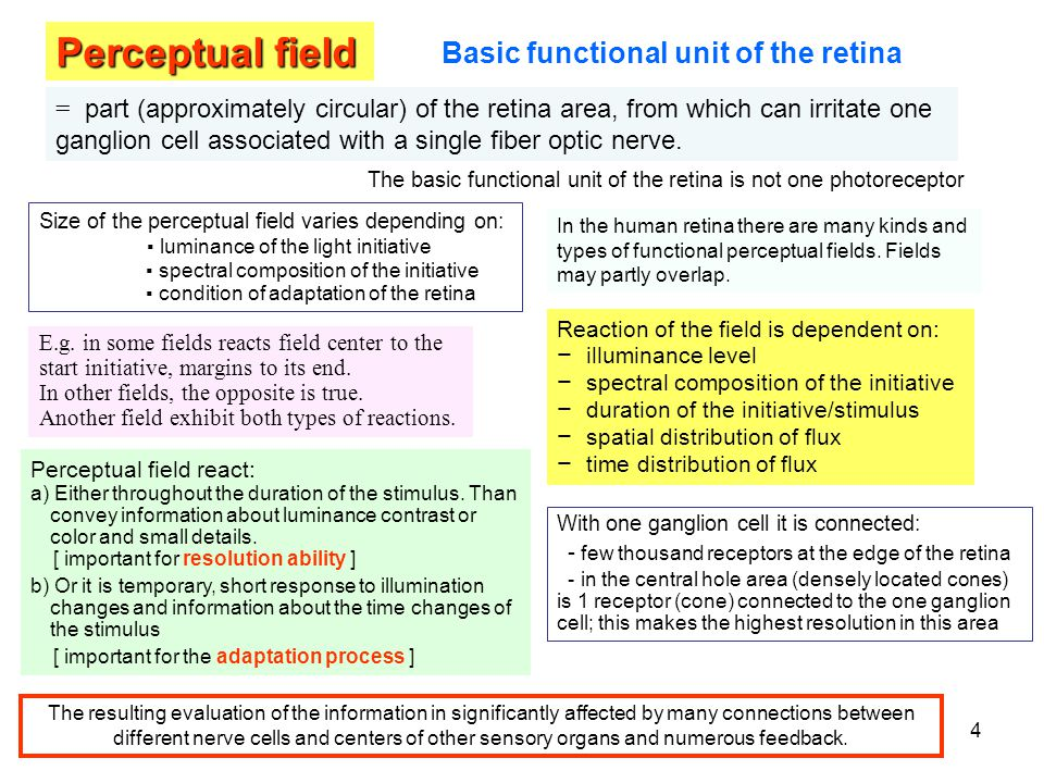 Perceptual field Basic functional unit of the retina