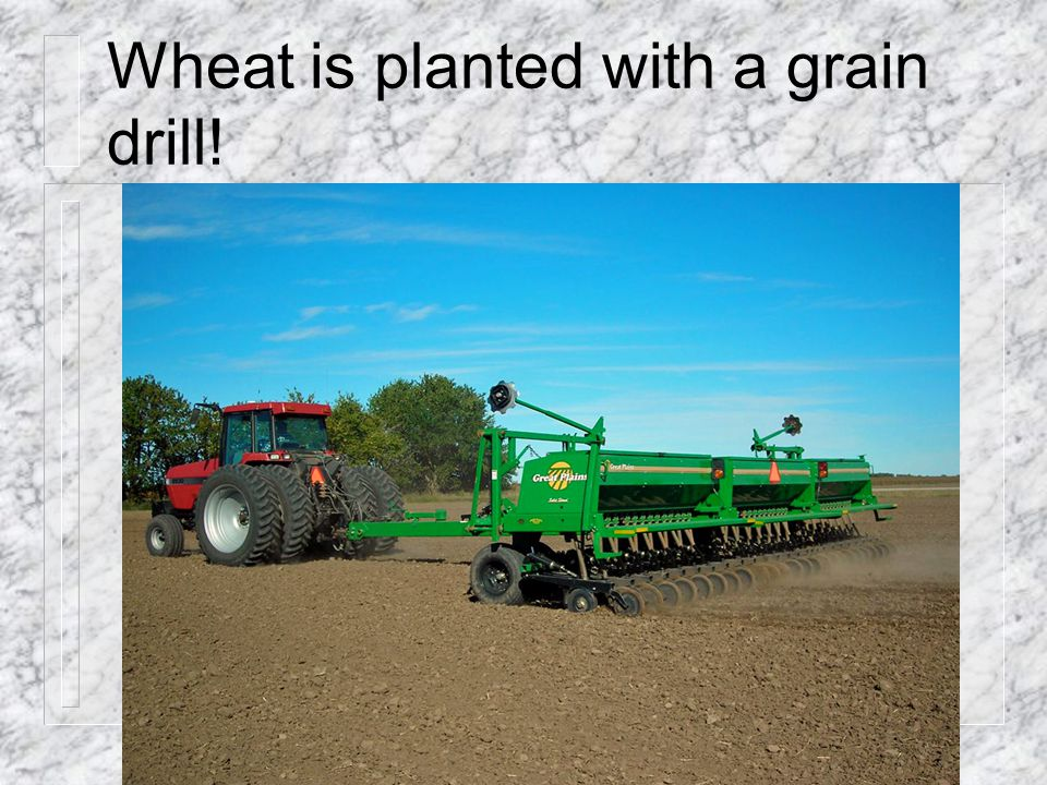 Wheat is planted with a grain drill!