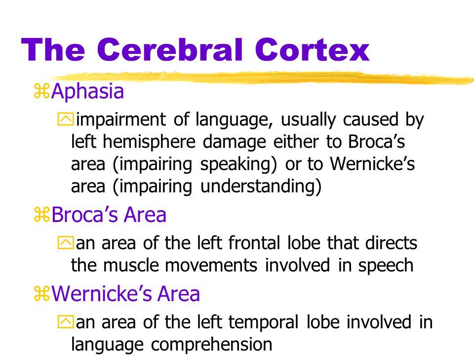 The Cerebral Cortex Aphasia Broca's Area Wernicke's Area