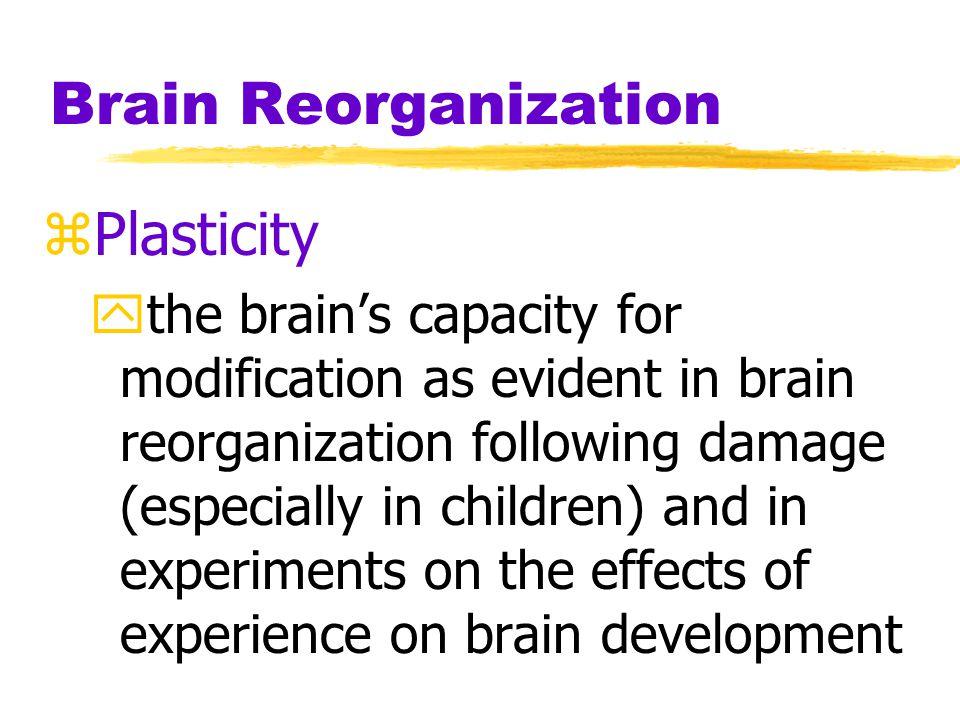 Brain Reorganization Plasticity