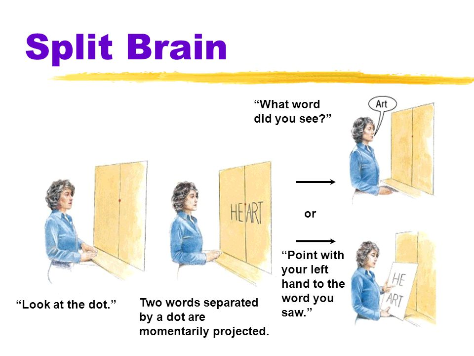 Split Brain What word did you see or Point with your left