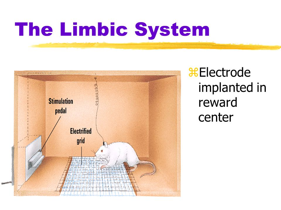 The Limbic System Electrode implanted in reward center