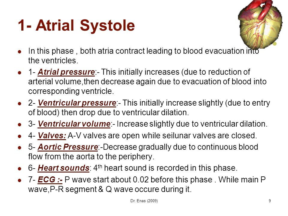 1- Atrial Systole In this phase , both atria contract leading to blood evacuation into the ventricles.