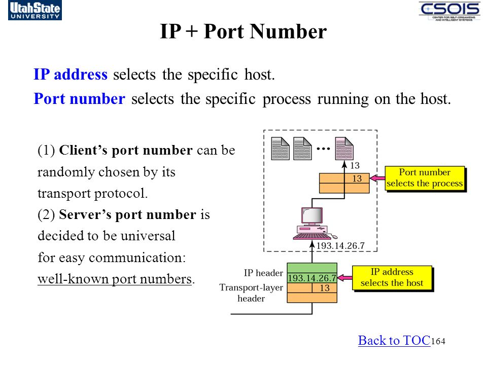 IP + Port Number IP address selects the specific host.