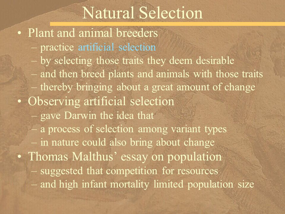 the different procedures that charles darwin made on the study of natural selection Darwin saw different species and made a the theory of natural selection by charles darwin the study of data collected during the study convinced darwin.