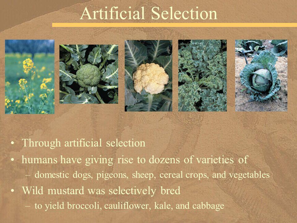 Artificial Selection Through artificial selection