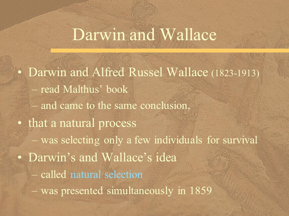 Darwin and Wallace Darwin and Alfred Russel Wallace (1823-1913)
