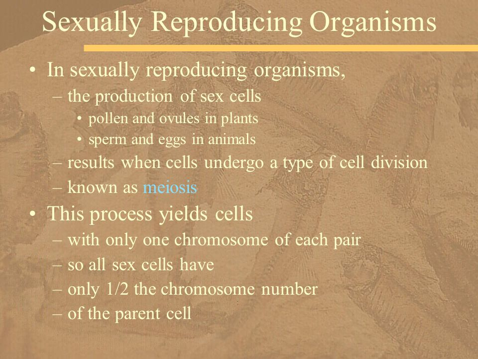 Sexually Reproducing Organisms