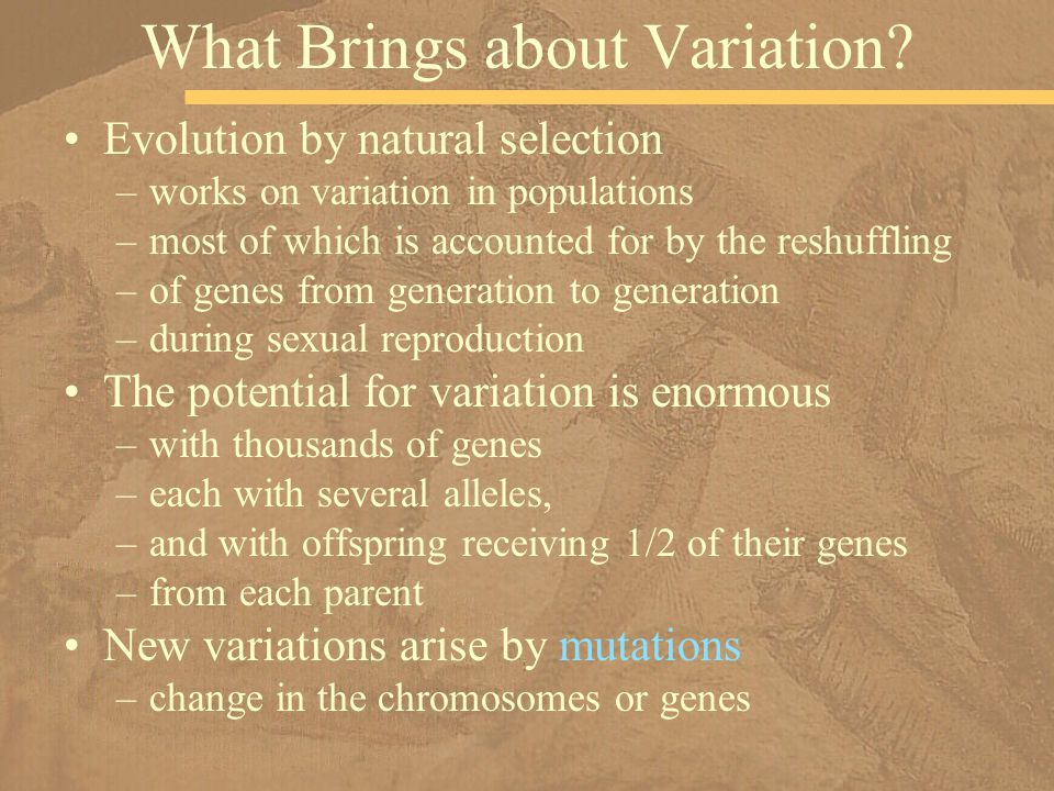 What Brings about Variation