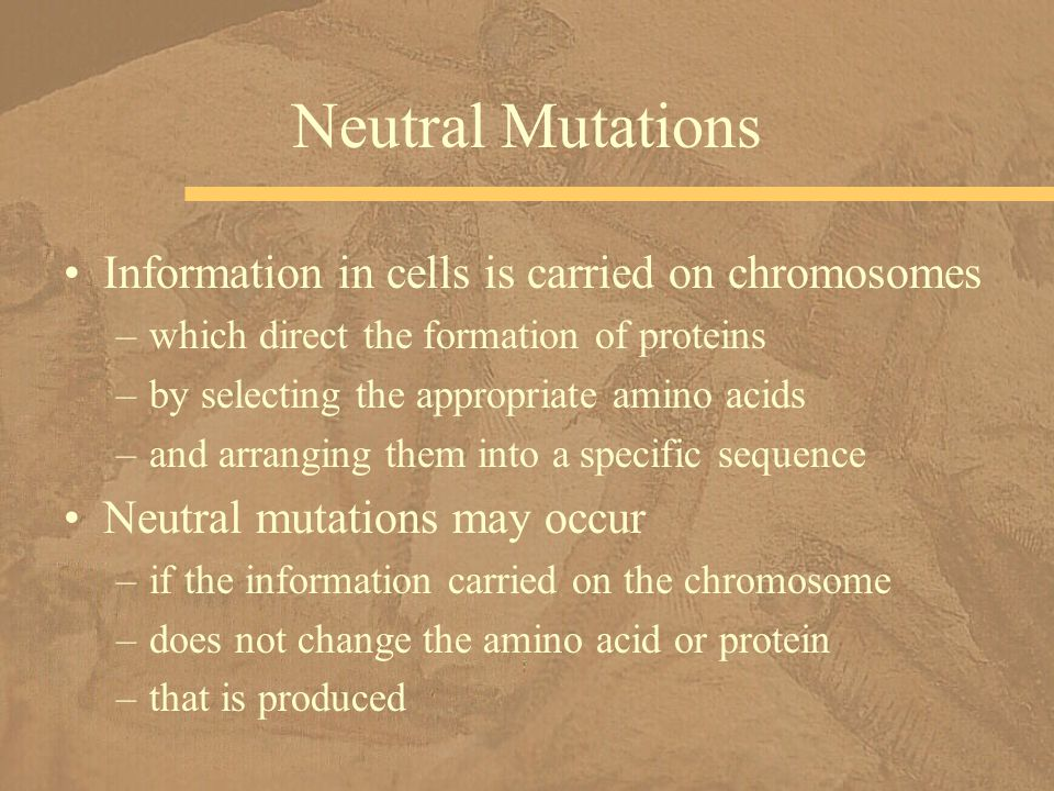 Neutral Mutations Information in cells is carried on chromosomes