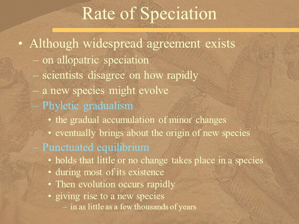Rate of Speciation Although widespread agreement exists