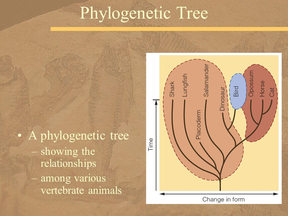 Phylogenetic Tree A phylogenetic tree showing the relationships