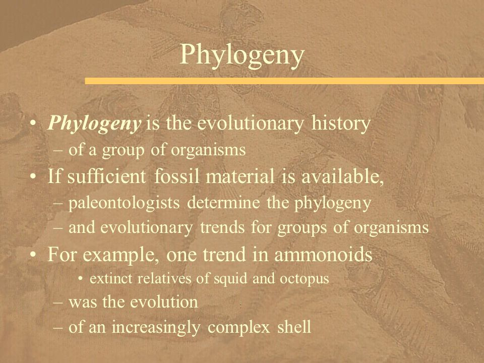 Phylogeny Phylogeny is the evolutionary history