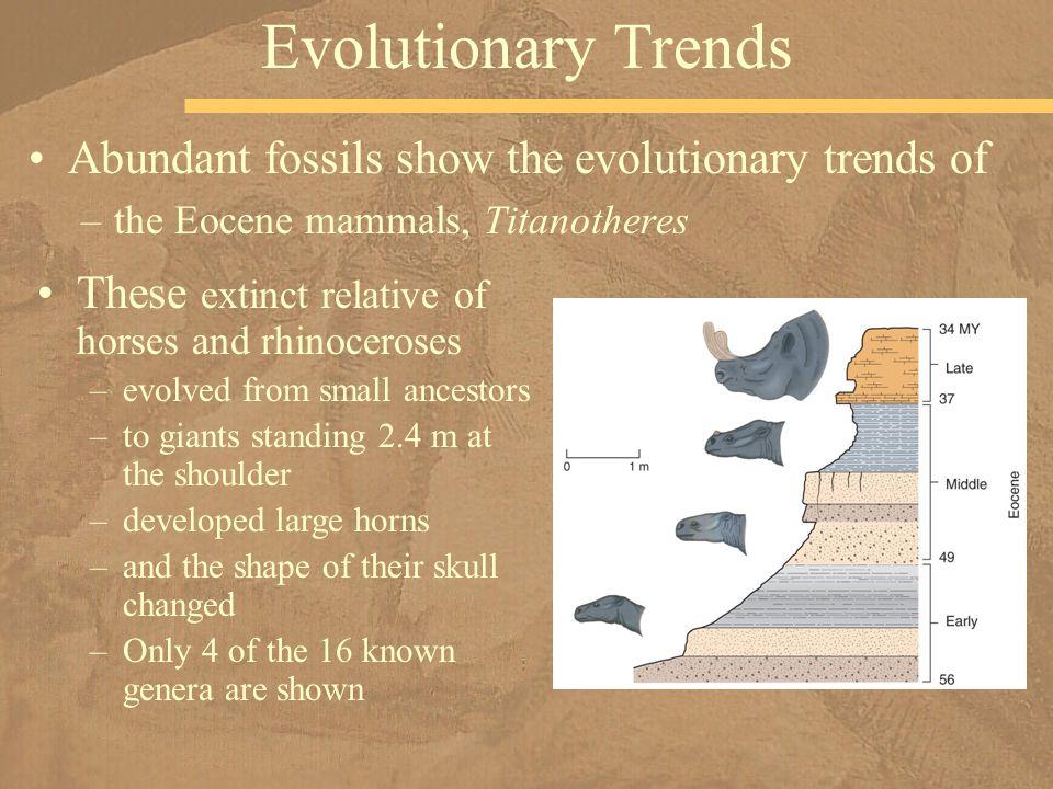 Evolutionary Trends Abundant fossils show the evolutionary trends of