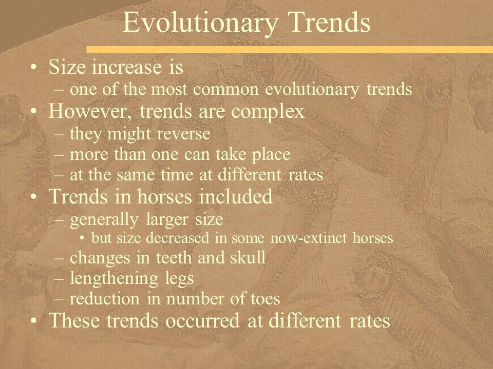 Evolutionary Trends Size increase is However, trends are complex