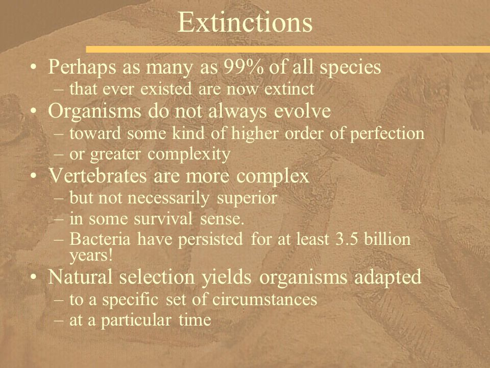 Extinctions Perhaps as many as 99% of all species